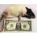Live Rat XL