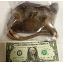 Live Rat XXXL