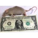 Live Mouse Jumbo